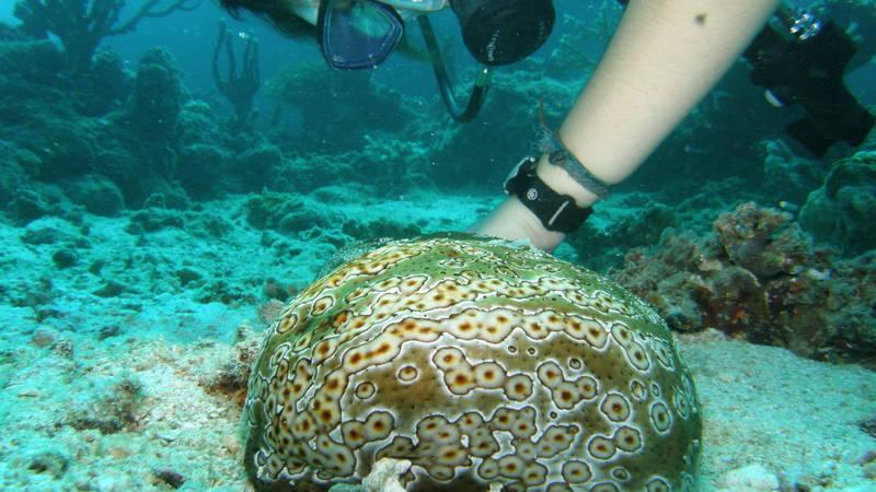 A survey diver and Leopard Fish