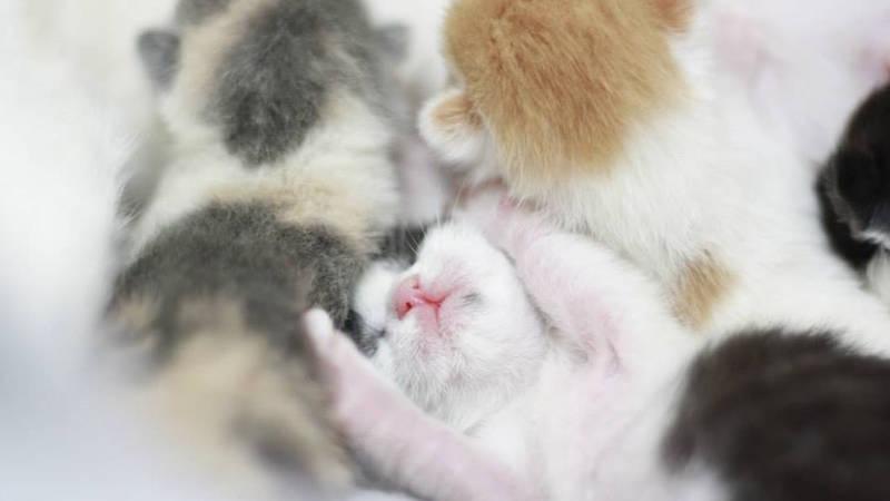 Help kittens