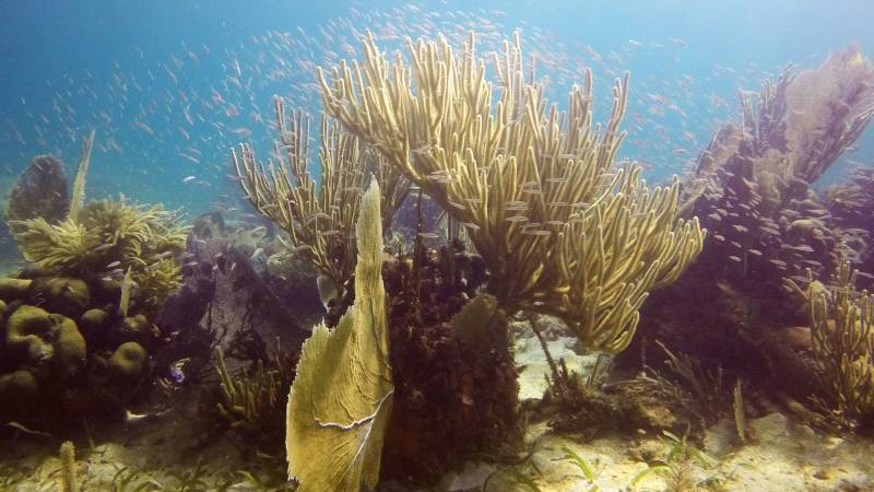 Assess coral reef health