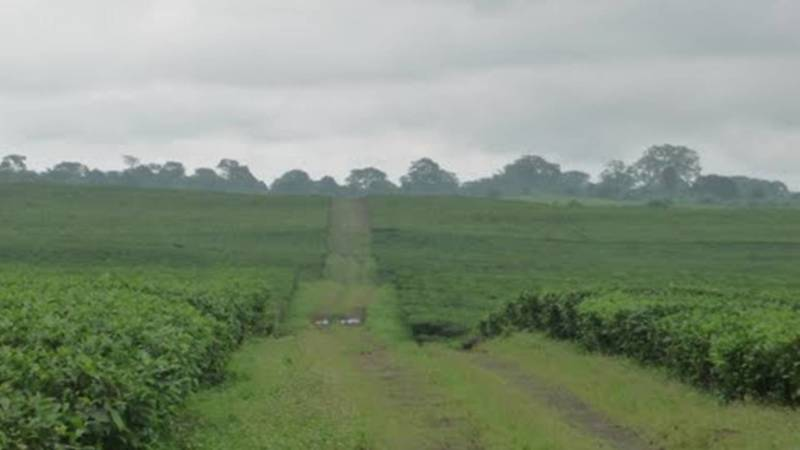 Road to Tole Tea, location of former outreach