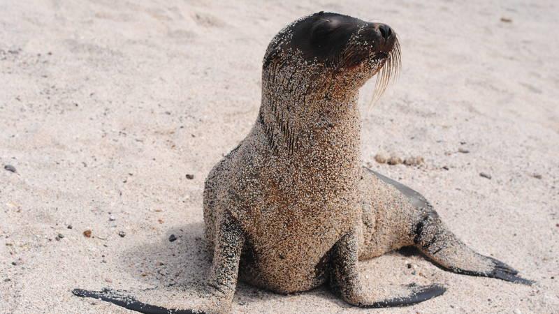 Wildlife on the Galapagos