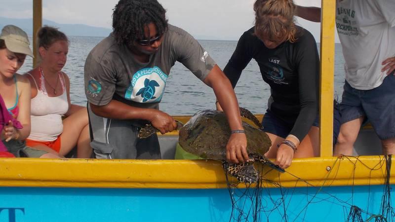 In water Sea Turtle Studies