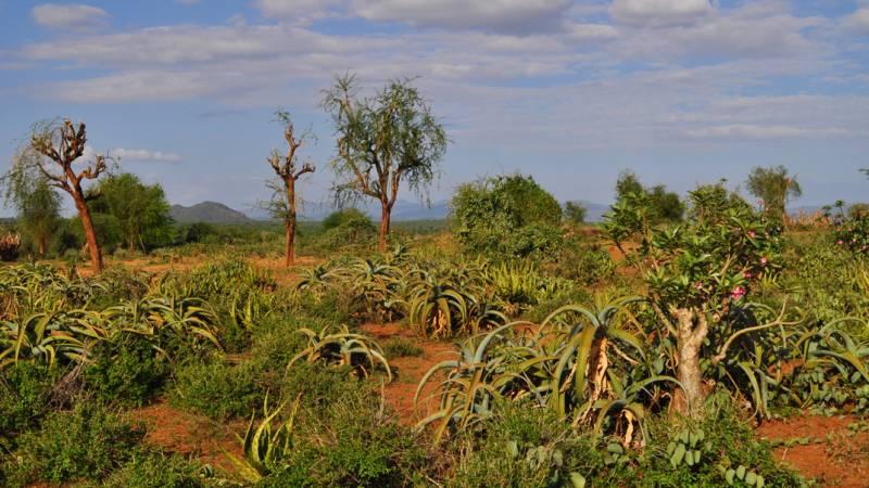 Mago National Park Conservation