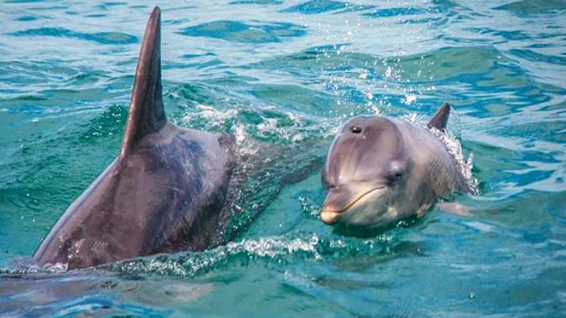 Close-up dolphins