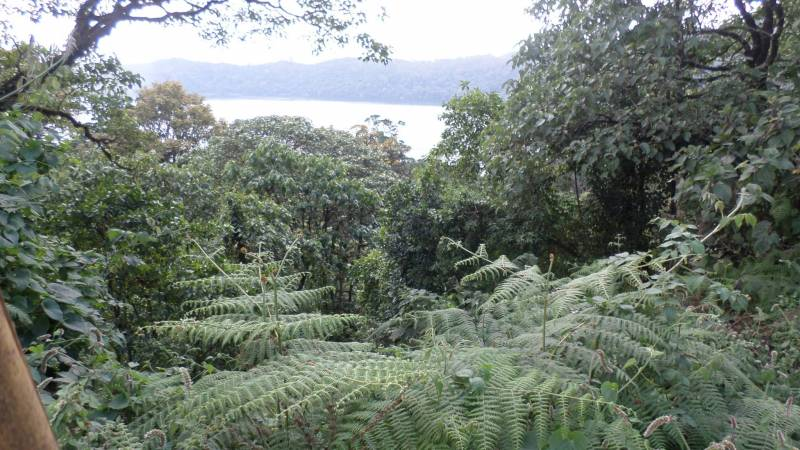 Plantlife Sanctuary