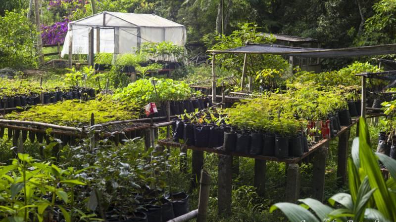 Iracambi nursery
