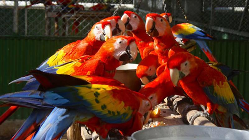 Research Parrots