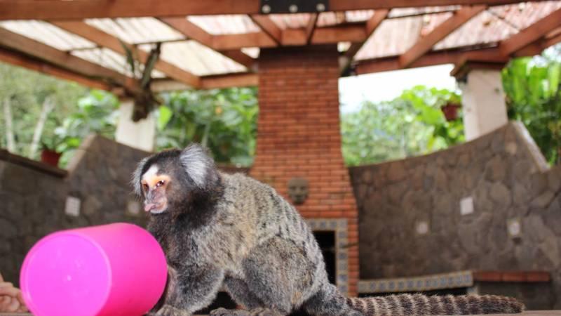 our monkey