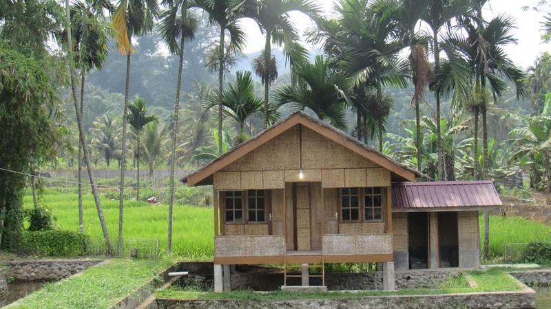 rice farm in buluhawar village