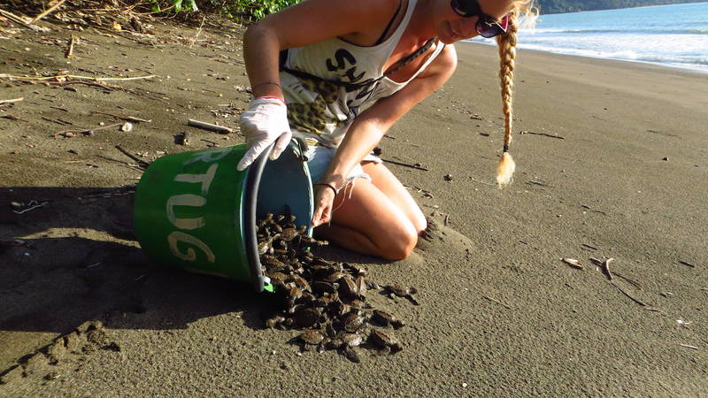 Save Turtles In Osa