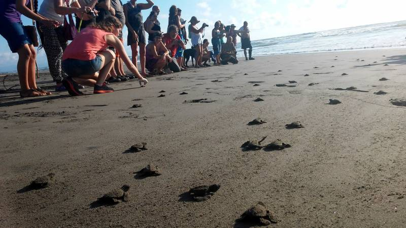 Turtle Conservation Experience