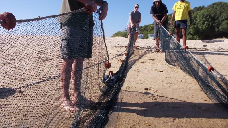 Seine Netting - Fish Evaluations