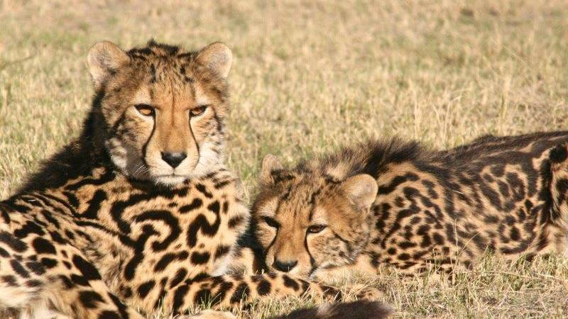 Cheetah and Wildlife Centre Supporter