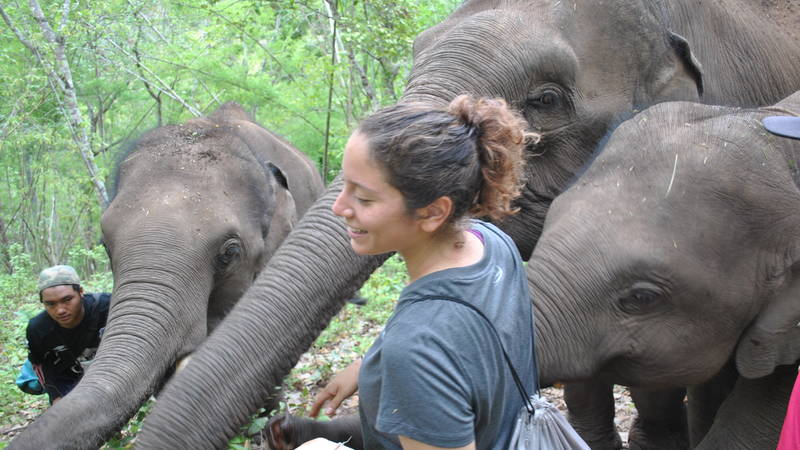 Elephant Research Internship