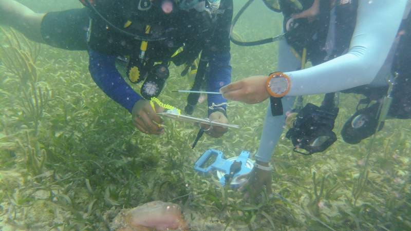 Use your new SCUBA skills for fisheries research