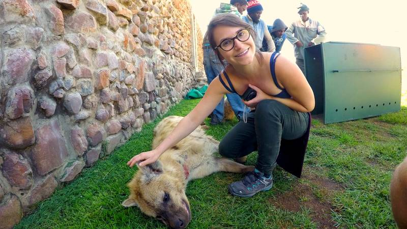 Wildlife Veterinary Training