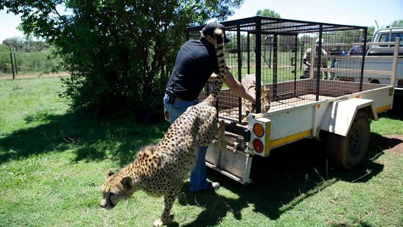 Wildlife Sanctuary Assistant