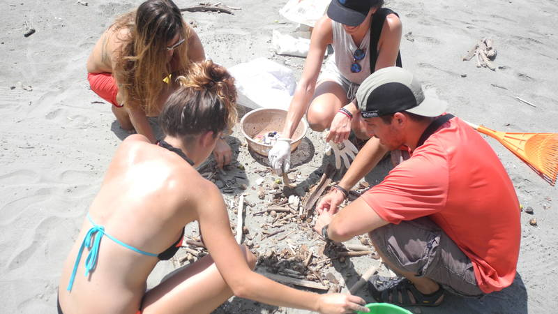 Montezuma Sea Turtles