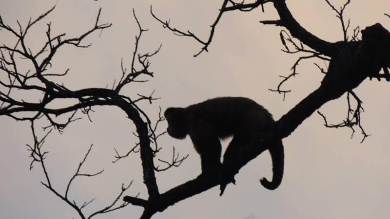 Search for monkeys