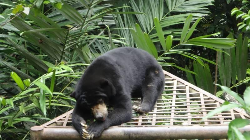 Samboja Lestari Orangutan Sanctuary