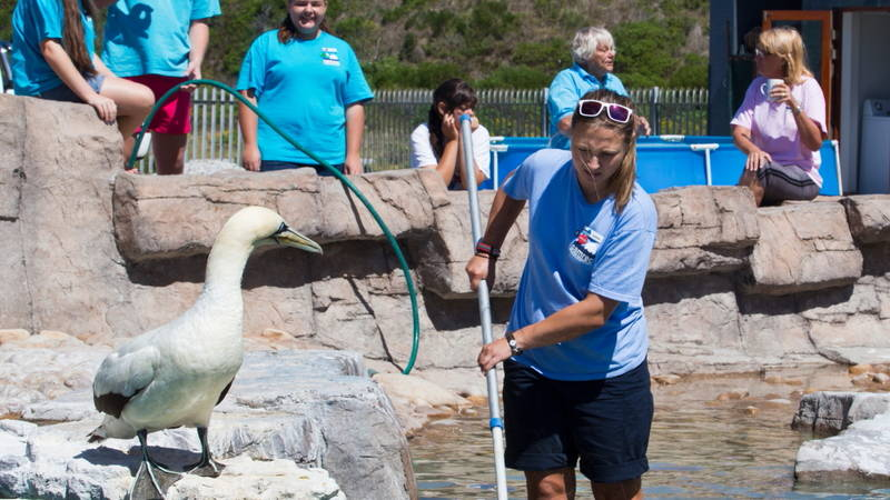 Cleaning the penguin enclosure