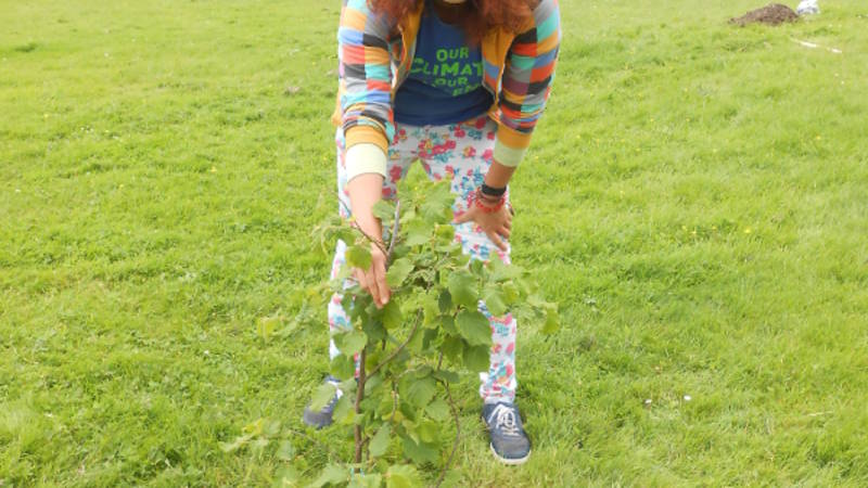 Planting trees at CICD