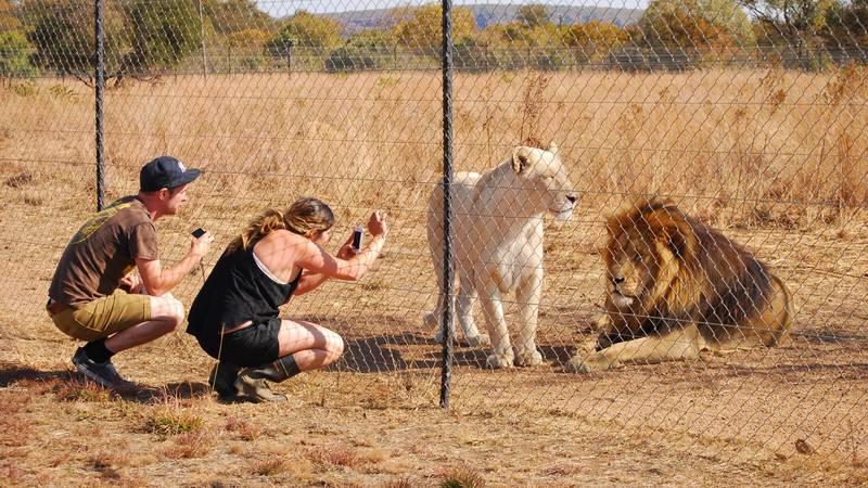 African Wildlife Sanctuary