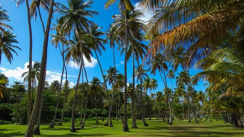 Enjoy all the beautiful scenery on the island