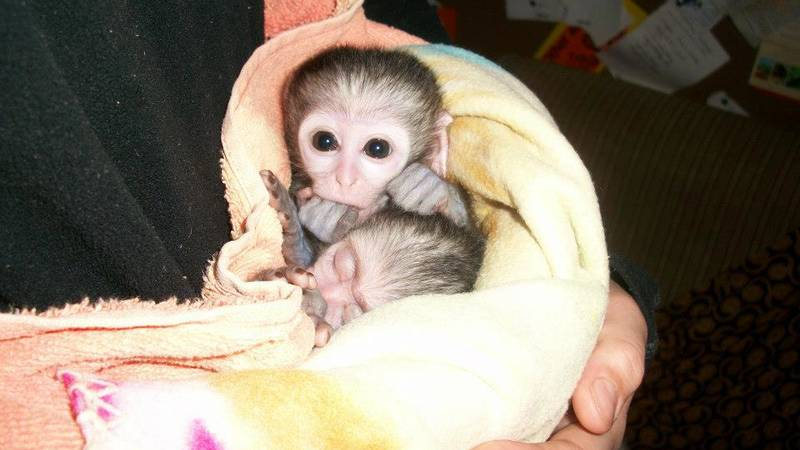 Orphaned and Injured Wildlife Conservation