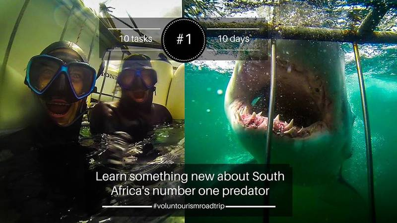 Joining research on the Great White Shark