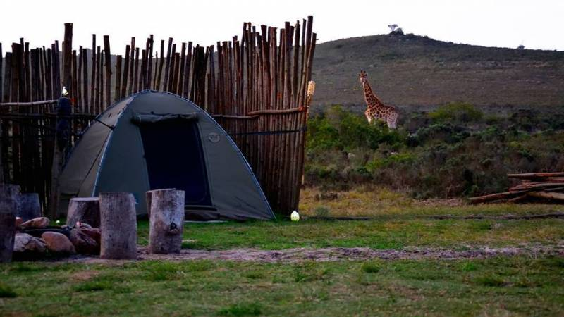 Tented acommodation during 3day Bush Camp