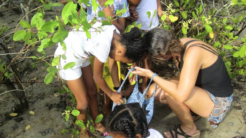 On the hunt for mangrove seeds