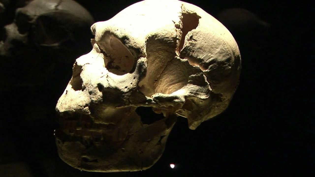 fosiles humanos atapuerca en el MEH