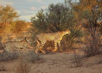 Ann van Dyk Cheetah Centre.jpg