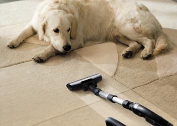 bigstock-Carpet-Dog-4678799.jpg