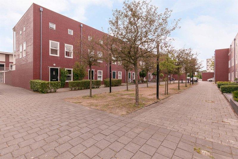 D. Schellincxstraat 1