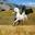 Small collage digitale animali ibridi arne fredriksen 24.jpg?googleaccessid=application bucket access@typee 222610.iam.gserviceaccount