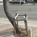 Large un albero ribelle.jpg?googleaccessid=application bucket access@typee 222610.iam.gserviceaccount