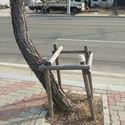 Large un albero ribelle.jpg?googleaccessid=application bucket access@typee 222610.iam.gserviceaccount