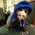 Large cute possums 341  700.jpg?googleaccessid=application bucket access@typee 222610.iam.gserviceaccount