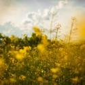 Large country field flora floral 1545.jpg?googleaccessid=application bucket access@typee 222610.iam.gserviceaccount