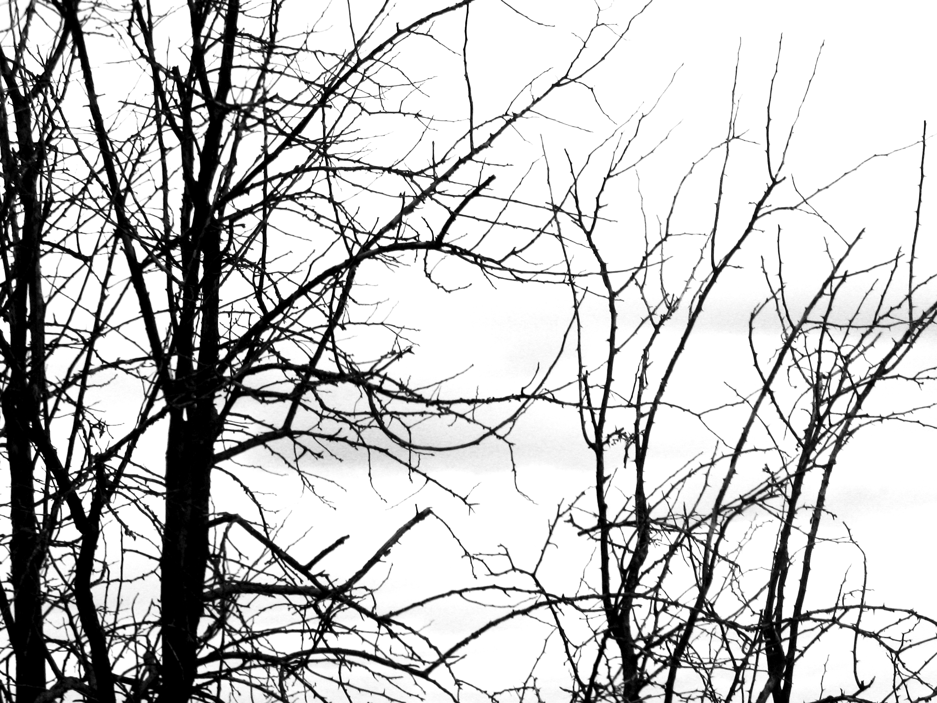 Free Black And White Tree Branch Plant Nature Texture Texture Lt