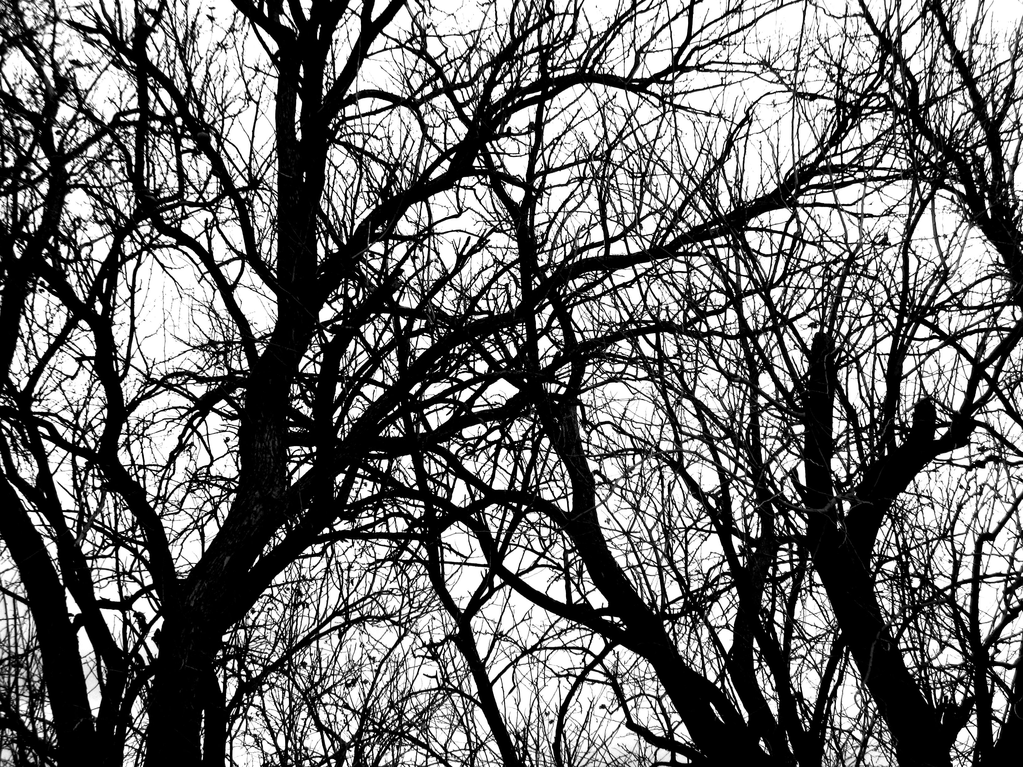 Free Black And White Tree Branch Plant Nature Texture ...
