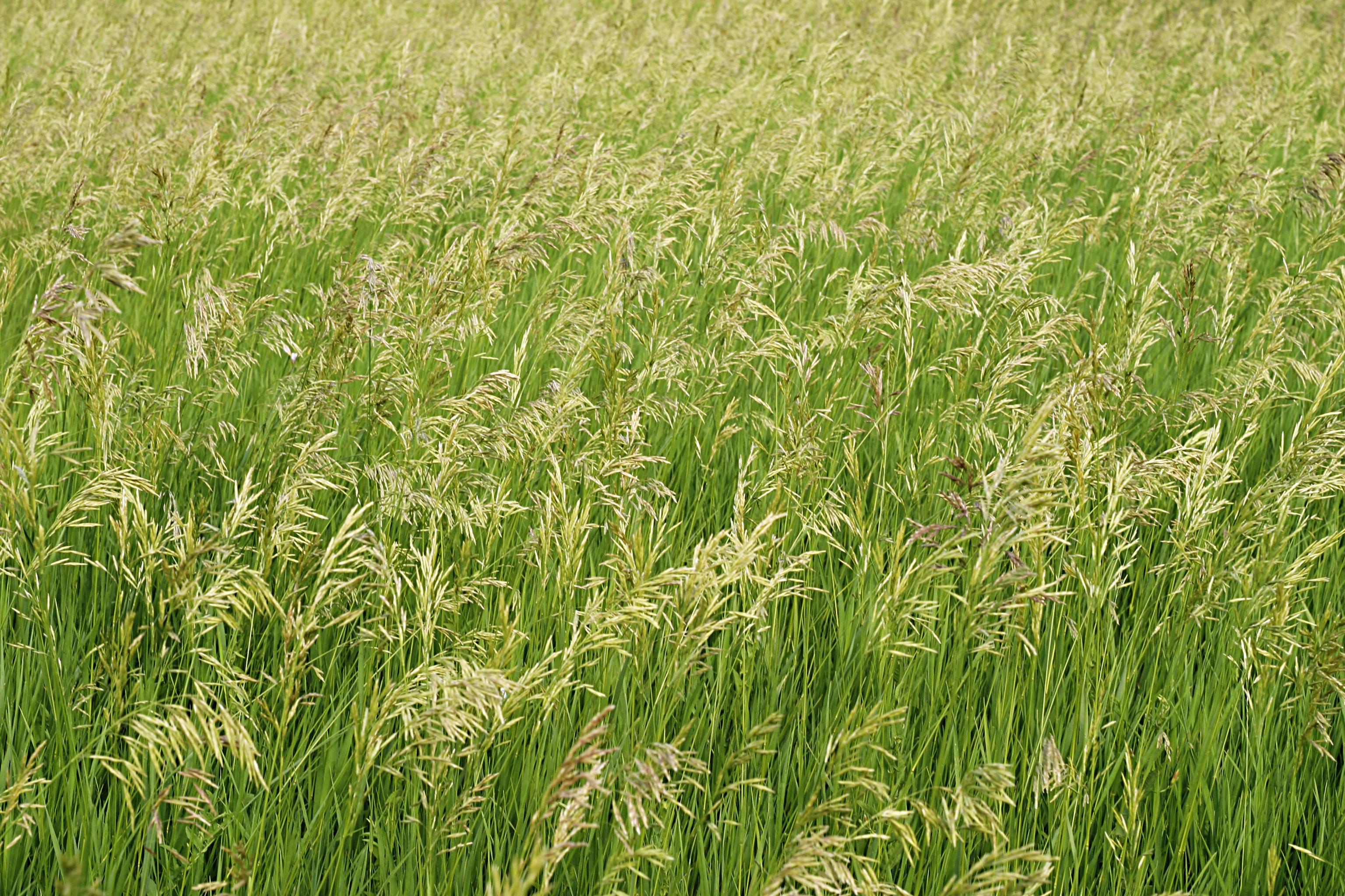 nature texture field plants