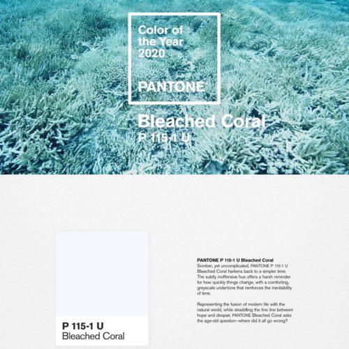86fd273b-bleached-coral-500x500.jpg