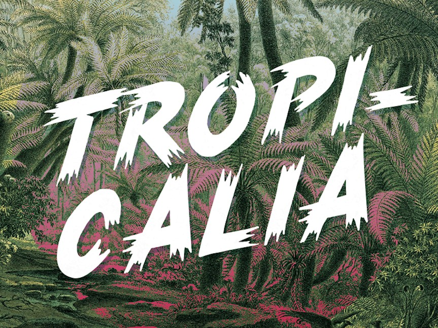 tropicalia-brush-typeface