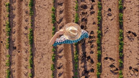 Agricultor camina por los campos de soja.