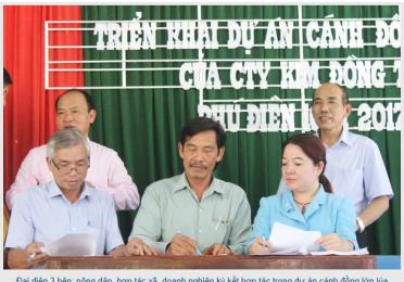 Triển khai dự án cánh đồng lớn lúa VietGAP tại xã Phú Điền