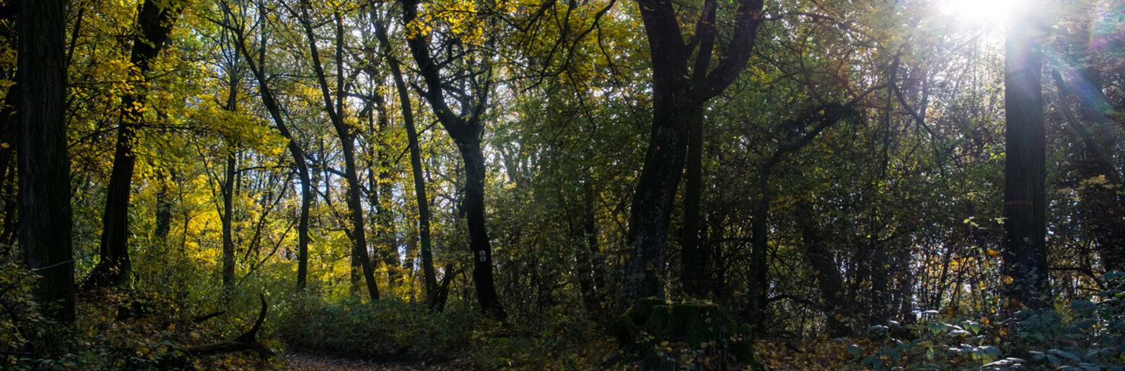 Arany, barna, vörös, zöld – 8 hely, ahol az ősz minden színét kiélvezhetjük
