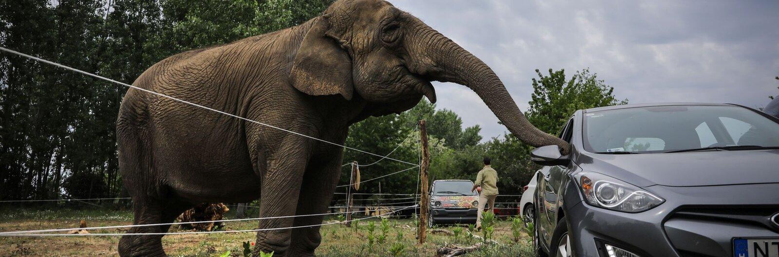 Megnyitott Magyarország első autós szafariparkja Budapesttől fél órára,  Szadán